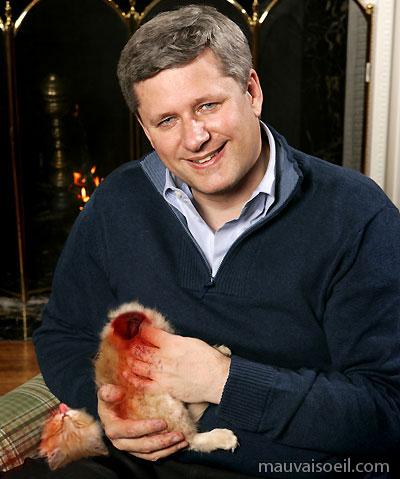 Chaque fois que tu te touches, Harper tue un chaton